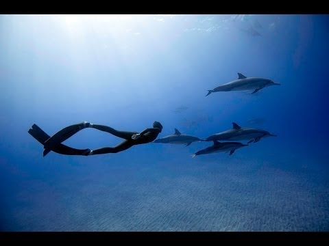 free diving - Freedive record holders Eusebio and Christina Saenz de Santamaria freediving with a pod of over 60 incredible Hawaiian Spinner Dolphins on the Big Island of ...