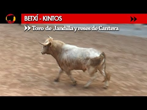 BETXÍ - KINTOS 16/08/2017 / TORO Nº 103 DE JANDILLA Y RESES DE CANTERA