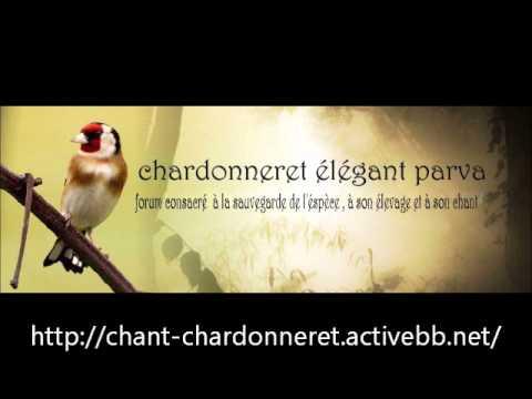chant chardonneret d'Algerie Royal top chant complet !!! http://chant-chardonneret.activebb.net/