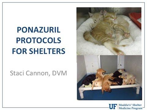 Vet to Vet: Ponazuril Protocols for Shelters