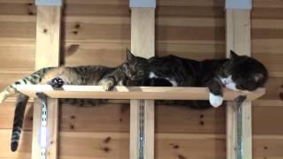 添い寝なねこ。-Maru&Hana sleep together.-