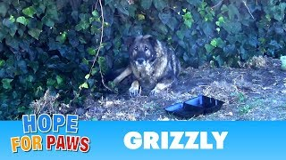 Senior German Shepherd abandoned by his owners.  I just don't understand this behavior  :-( by Hope For Paws