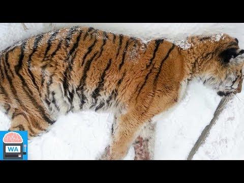 Sibirien: Mann bekommt seine Tür nicht auf – plötzlich hört er ein Knurren ...