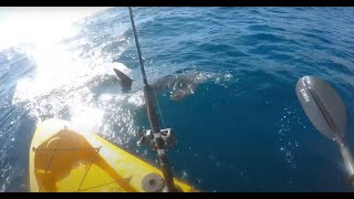 Video Kayak fisherman fights off aggresive hammerhead shark!!! (full video) MP3, 3GP, MP4, WEBM, AVI, FLV Juli 2019