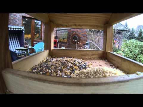 "Birds""/> My first Gopro-movie at our bird house :-)<br /> <div class="