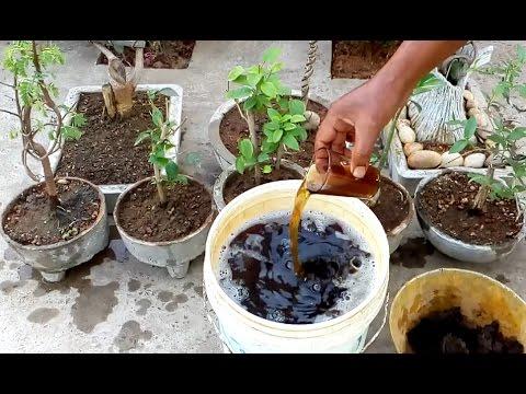 How to make liquid organic fertilizer at home