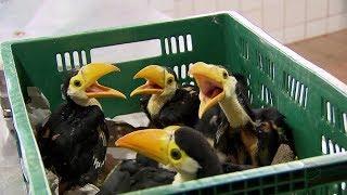 Filhotes de tucano resgatados pela Polícia Ambiental recebem cuidados no Zoológico