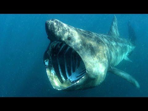 5 suoni misteriosi registrati nelle profondità del mare