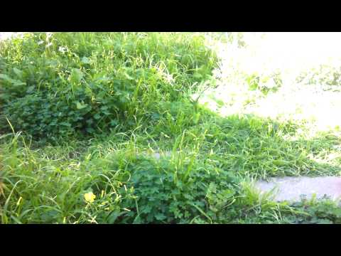 Native plants as food southern california