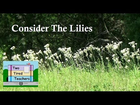 Consider the Lilies - RV Inspiration