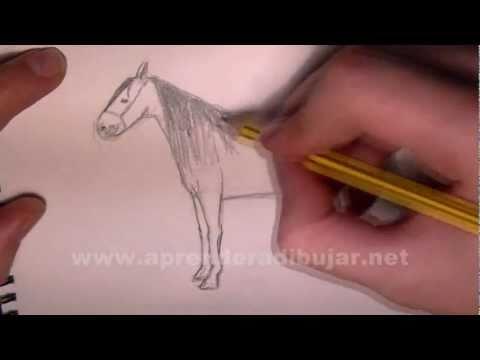 Pferd Zeichnung – Online Zeichnen Lernen