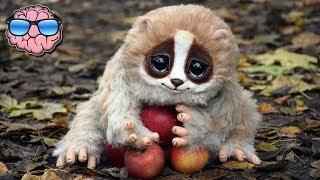 Video 10 CUTE Animals That Can KILL You MP3, 3GP, MP4, WEBM, AVI, FLV September 2017