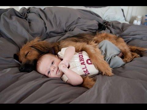 guardate come questi cani proteggono i loro bambini!