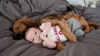 Funny Dogs Protecting Babies Compilation (2016)