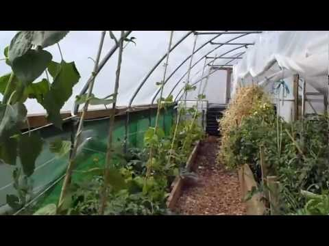 polytunnels - A tour of the incredible edible growing ltd site in Todmorden part 2, inside the polytunnels.