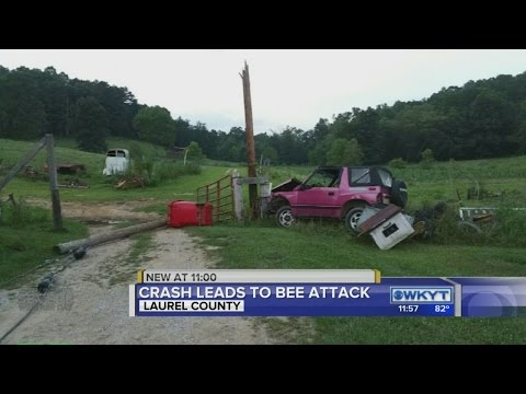 After bee attack, Kentucky farmer gives most country interview ever