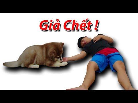 NTN - Giả Chết Thử Lòng Cún Con Alaska ( Playing Dead With Dog ) (видео)