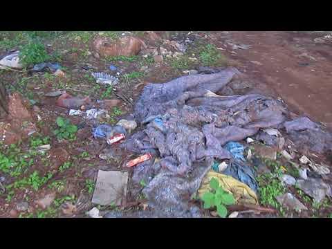 تدمير بيئي بغابة لايبيكا