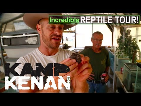 YouTube reptile video