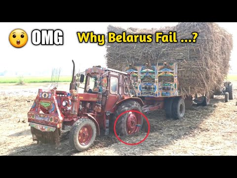 Belarus 510 Together pulling sugarcane loaded trailer must watch