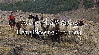 Accha Alta Weavers - Llama Blessing Ceremony