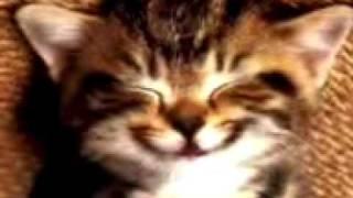 Un Gato Cantando La Cancion Del Cumpleaños
