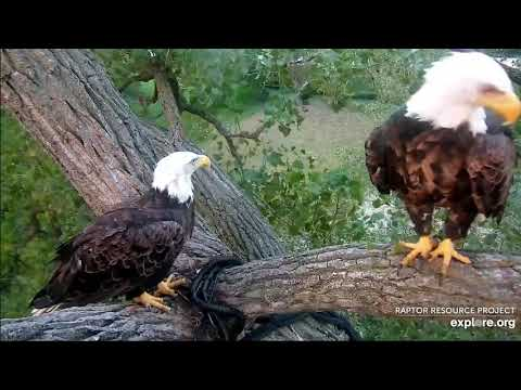 Decorah Eagles 8-14-20, 8 pm Mom at the Y, N1, DM2 joins her