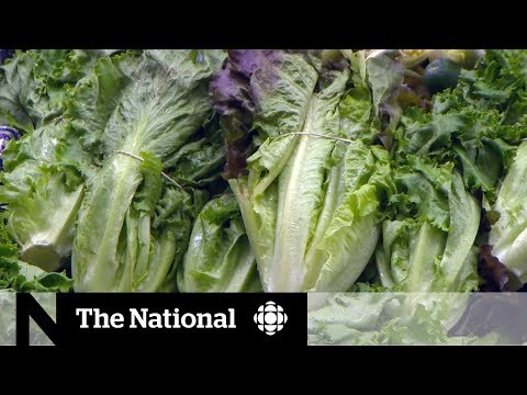 Avoid romaine lettuce amid E. coli outbreak, health officials warn