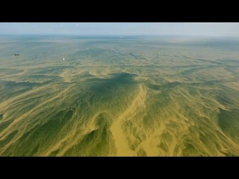 Polnische Ostseeküste: Badeverbot wegen Blaualgen