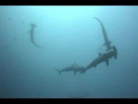 El paraiso de Costa Rica Isla de Cocos