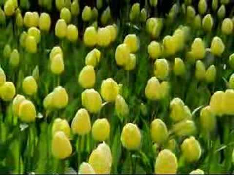 Fun in Amsterdam tulip garden