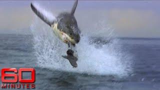 Video 60 Minutes Australia: Shark Shield MP3, 3GP, MP4, WEBM, AVI, FLV Juni 2019