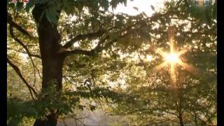ایران زیبا - جنگل نهارخوران