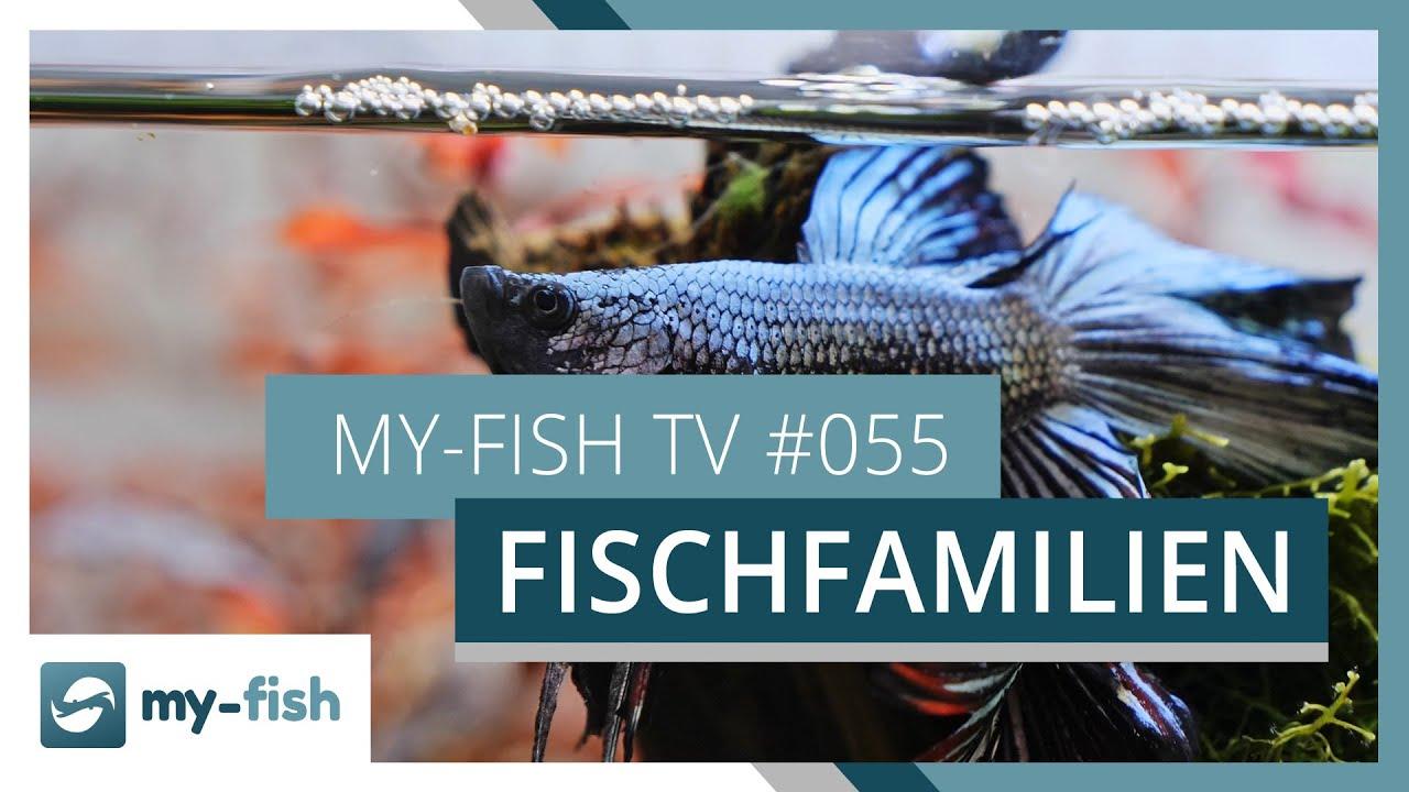 my-fish TV - Deine Nr. 1 Anlaufstelle für alle Themen rund um die Aquaristik 9