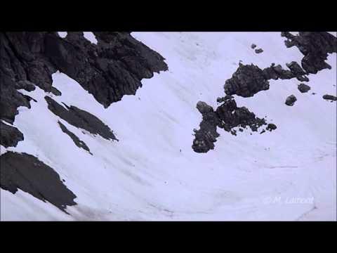 Possible Sasquatch Sighting in the Squamish area BC, Canada