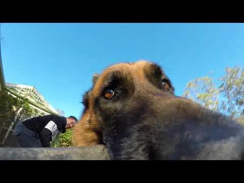 Пес отобрал у своего хозяина видеокамеру и устроил веселый забег во дворе своего дома