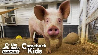 People Find Pig In Hurricane And Make Him Their Son | The Dodo Comeback Kids by The Dodo