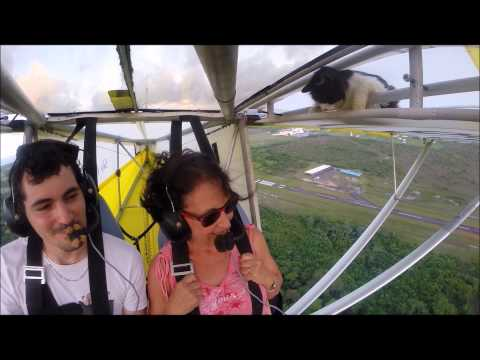 Cat Stowaway On Glider Is Full Of Regret