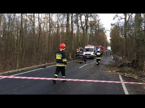 Z BMW została tylko miazga! Tak wygląda auto po zderzeniu z kilkoma drzewami – Polska!
