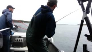 Daves fish part 2.
