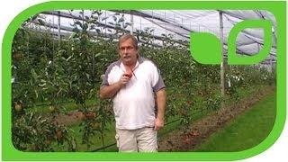 #108 Die Kunst der Apfeldegustation