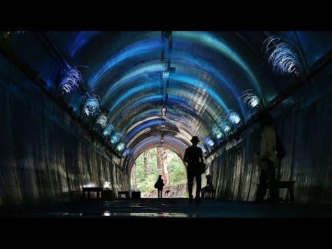 涼感誘う「森のトンネル」 神戸・森林植物園