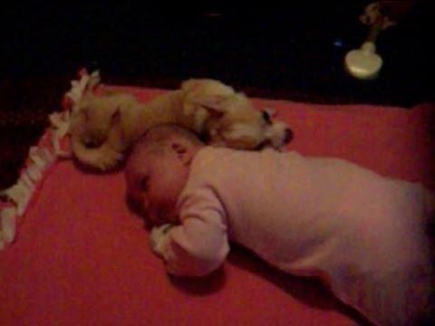 cagnolino-fa-le-coccole-al-neonato