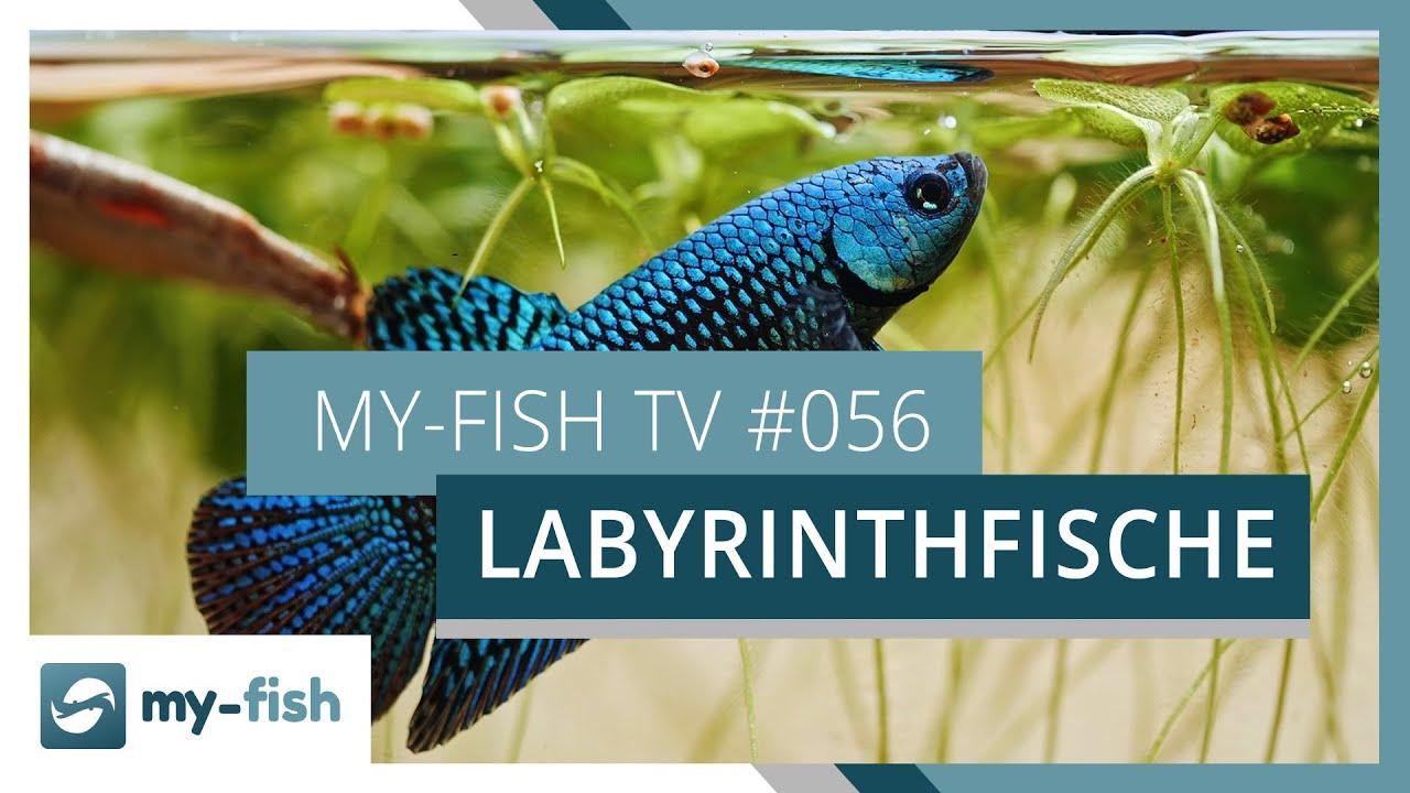 my-fish TV - Deine Nr. 1 Anlaufstelle für alle Themen rund um die Aquaristik 8