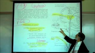 PAIN PHYSIOLOGY By Professor Fink
