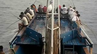 Download Video Mancing ikan tongkol dan cakalang-cara nelayan indonesia mancing berlimpah MP3 3GP MP4