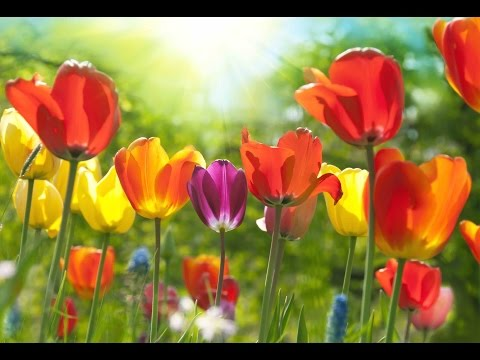 "Peaceful Music, Relaxing Music, Instrumental Music, ""A Thought Of Spring"" By Tim Janis"