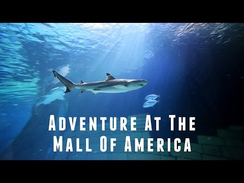 Adventure at the Mall of America