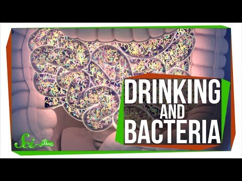 Does Drinking Alcohol Kill Your Gut Bacteria?