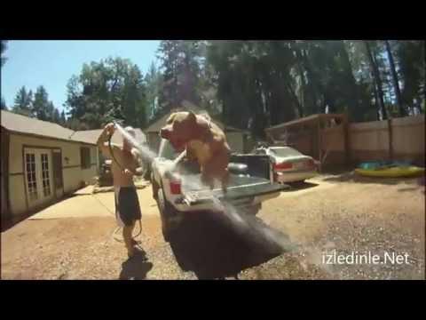 pitbull 'lar dövüş kavga hayvanı değildir